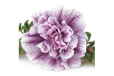 Петуния Lavender Bouquet