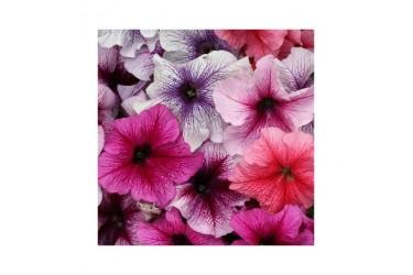Петуния крупноцветковая Prism Sundae Mix